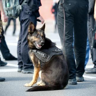Hunde Gehörschutz
